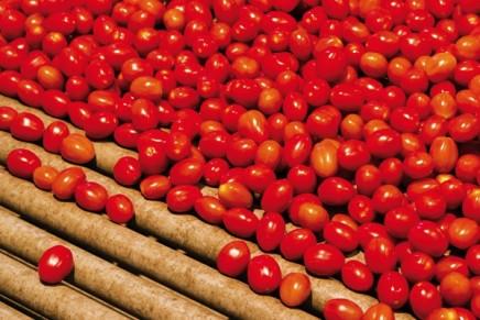 Un superpomodoro ricco di antiossidanti