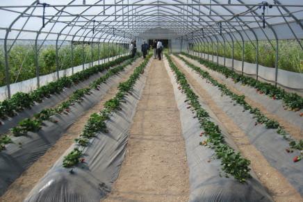 Biosemed, l'agroecologia per il bio in serra