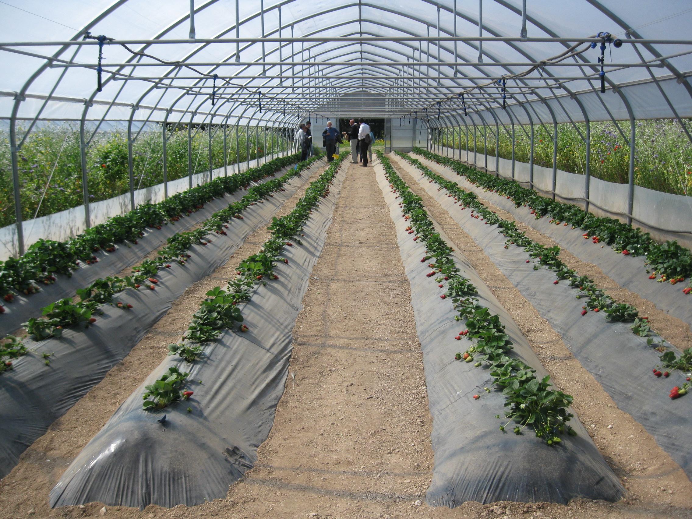 Biosemed l agroecologia per il bio in serra