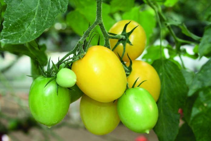 forme verdure