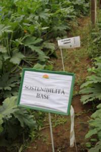 La necessità di commercializzare il frutto con il fiore, come prassi per le tipologie romanesche, è una sfida vinta grazie all^effetto AgCelence delle strategie di difesa BASF.