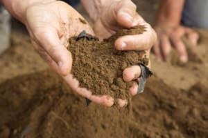 Assenza di residuo nel terreno ad un mese e mezzo dall^espianto e triturazione del telo pacciamante ECOVIO