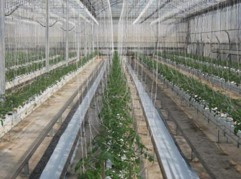 L'elettronica organica nella serra high tech