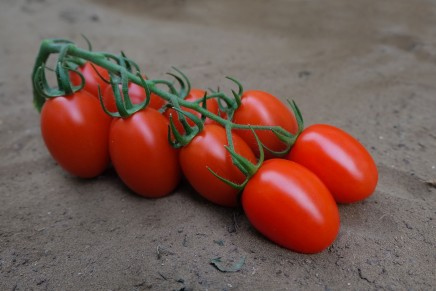 Pomodoro, le novità varietali 2017