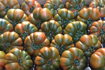 Pomodoro, la qualità al primo posto