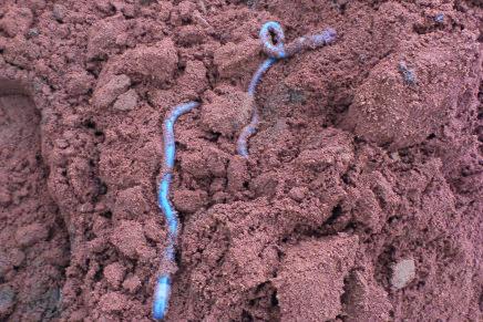 Il valore della sostanza organica nel terreno