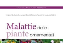 MALATTIE_PIANTE_ORNAMENTALI_