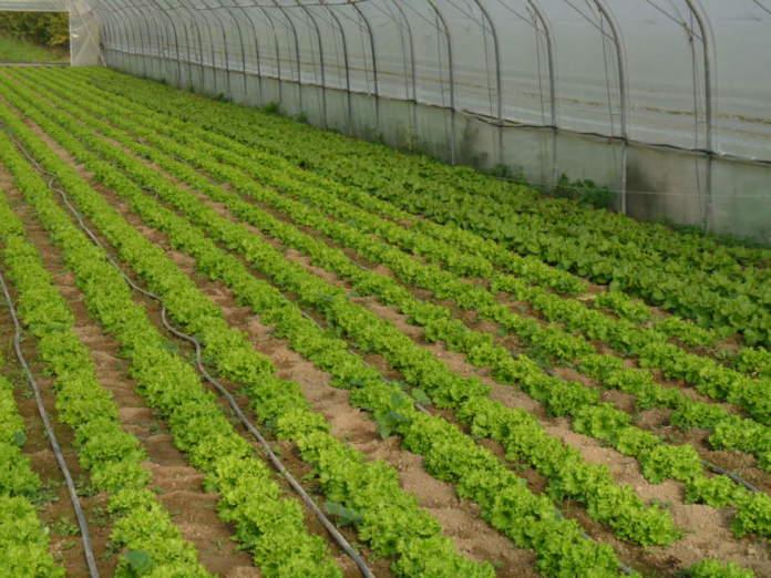 fosforo piante