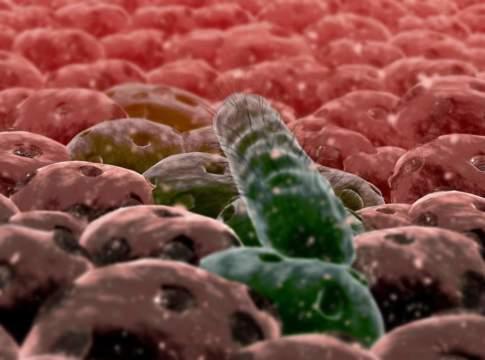 bioinsetticidi