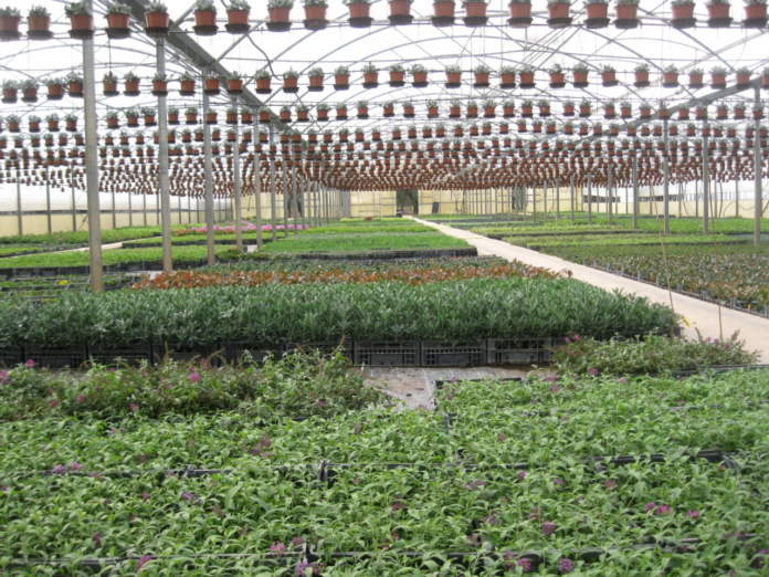 protezione fitosanitaria