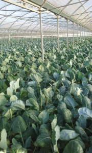 fertilizzazione in coltura protetta
