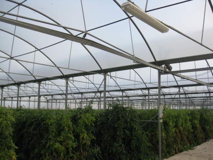 preparazione coltivazione fuori suolo