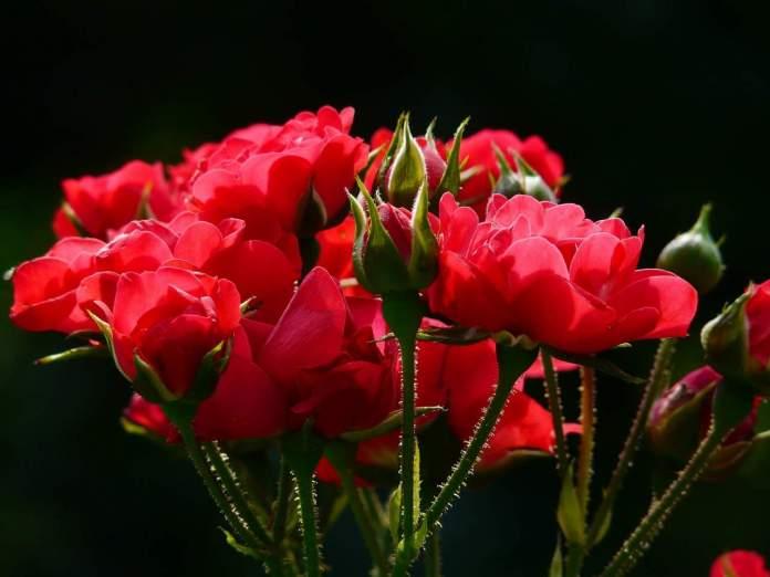 regime forfetario florovivaisti