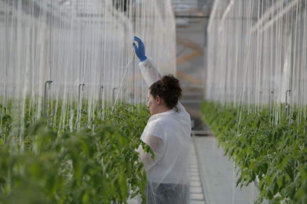 innovazione sfera agricola
