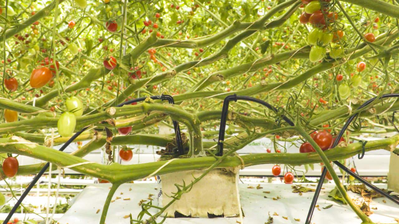 innovazione in orticoltura