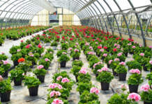 aiuti florovivasismo