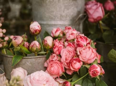 decreto rilancio florovivaismo