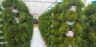 Macfrut innovazione colture protette