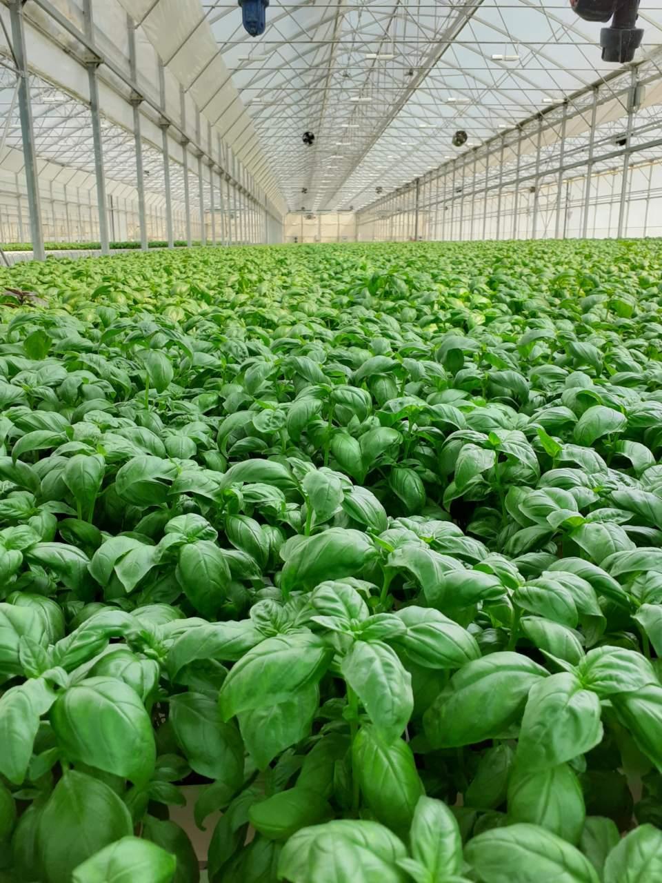 innovazione colture protette