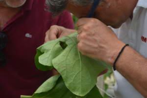 insetticidi biostimolanti