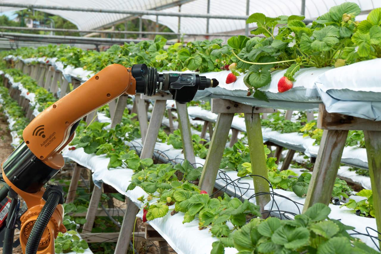 robotica colture protette
