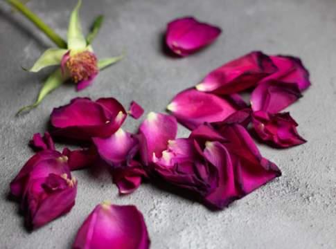 floricoltori in crisi