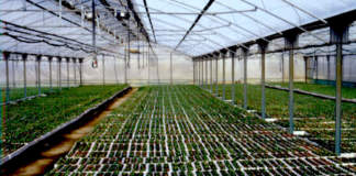 nuovo regime fitosanitario