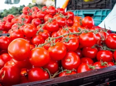 prezzi all'ingrosso pomodori