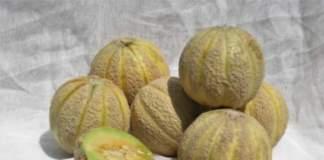 Meloni reggiani Slow Food