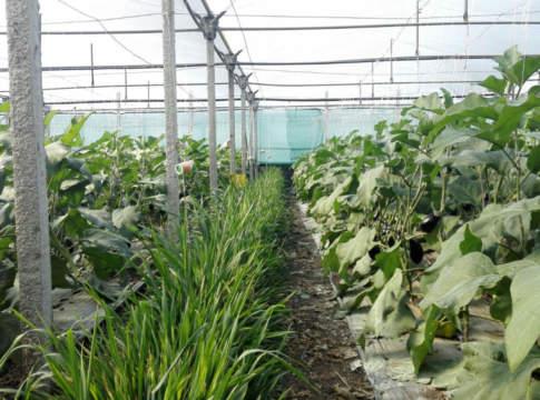 banker plant