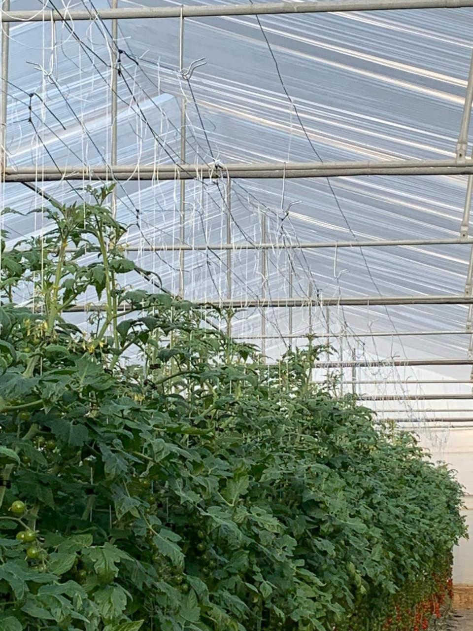 Pomodori Sia Sicilia Group