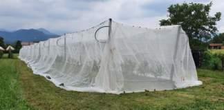 Agrion fragola 2020