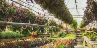 Toscana florovivaismo