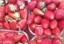 prezzi ingrosso fragole