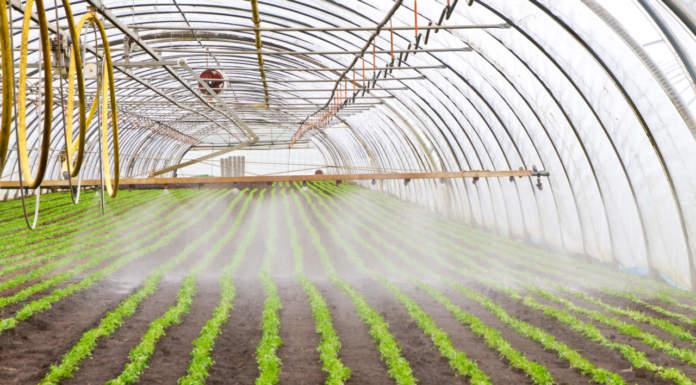 Giornate dell'irrigazione di precisione a Po di Tramontana