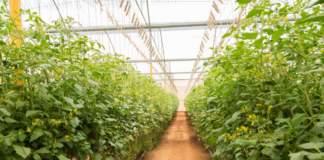 sensori irrigazione