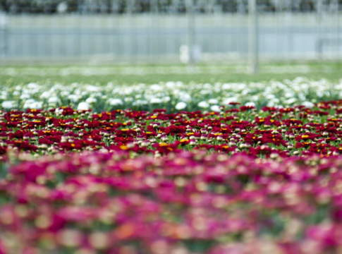 serra fiori