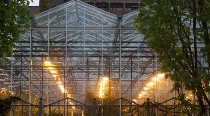 lampade in serra
