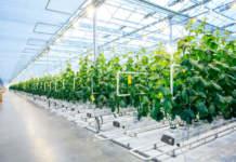 sostenibilità in orticoltura